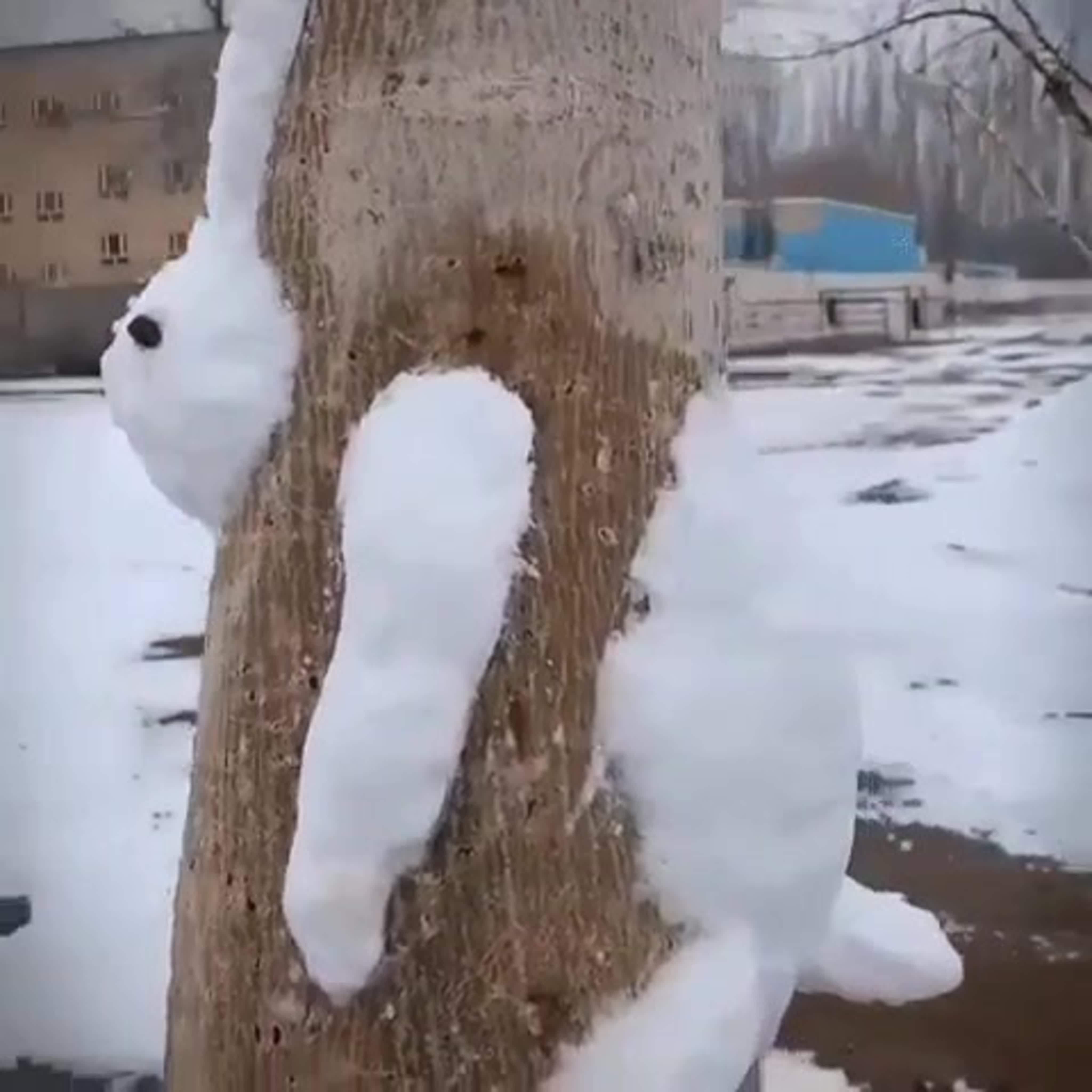 Зайка в Одинцово!