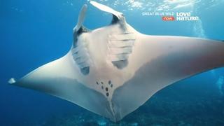 Великие океаны - Дикий берег Южной Африки. Документальный фильм 4K Ultra HD