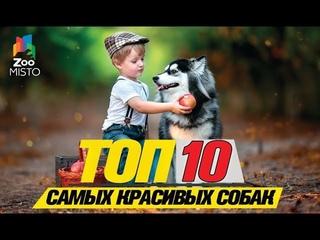 Топ 10 самых красивых собак\Top 10 Most Beautiful Dogs