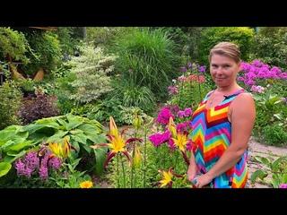 Яркий лилейник спайдер Velvet Ribbons (Вельвет Риббонс) в моем саду