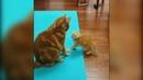 лучшие приколы с котами и кошками