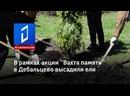 В рамках акции Вахта памяти в Дебальцево высадили ели
