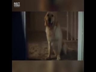 Собака покидает хозяина только один единственный раз