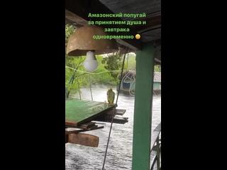 Video by Anastasia Sereda