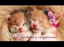 Смешные коты и котики ! Приколы с котами ! Поздравления с 8 марта
