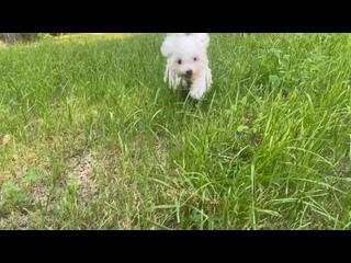 Video by Svetlana Frolova