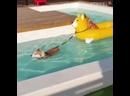 Собака боится плавать, но друг не оставит в беде Sputnik Южн