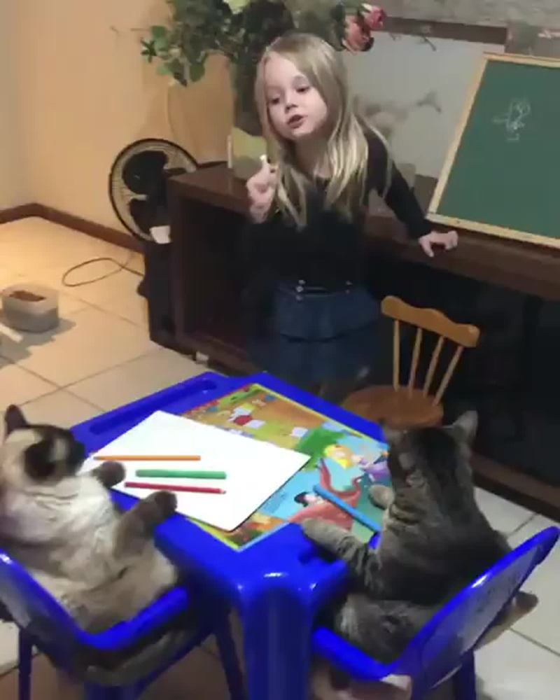 little girl teaching her cats how to draw a flower