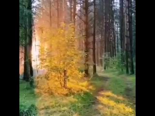 Video by Natalya Karaseva