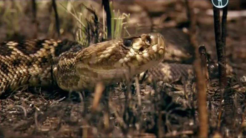 BBC Чудеса жизни 2 серия Эволюция органов чувств научный фильм ВВС 2013 год