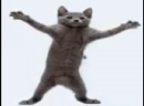 відео про котів