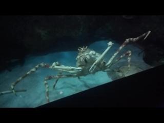 океанариум Фукуок. крабы