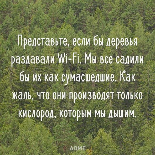 У меня бы был целый лес
