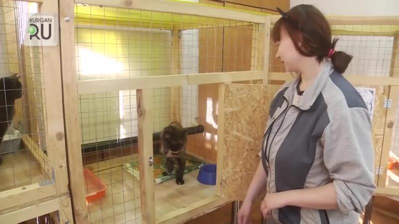 Зоозащитники-добиваются-закрытия-выставки-кошек-животные-грязные-и-больные.mp4