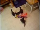 Бешеные котята =