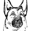 Школа дрессировки/ Волховский клуб собаководства