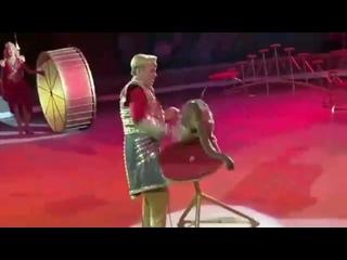 Новогодние пытки животных в цирке. Зритель оплачивает это покупая билет в цирк..mp4