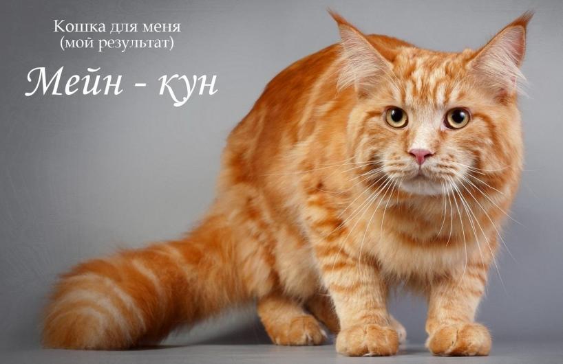 фото из альбома Данилы Китова №2