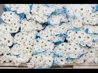 Новая поставка цветов I Спутник цветы оптом
