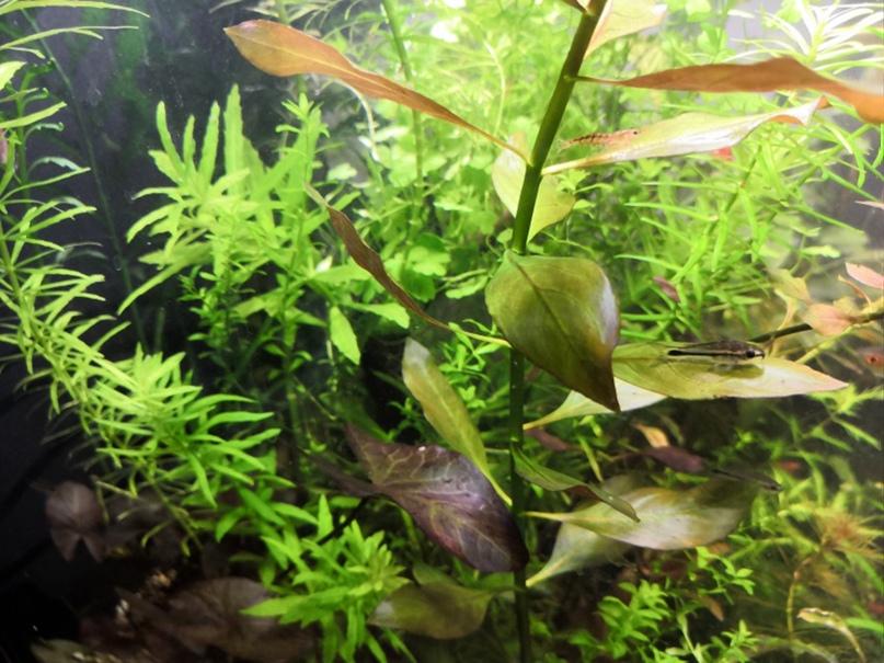 1 Юлия Черкас - Обзор светильника AQUAEL LEDDY SMART 2 PLANT, изображение №11