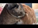 Видео от Анастасии Артамоновой