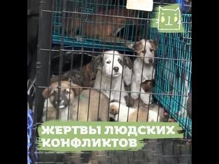 Спасают животных из Нагорного Карабаха