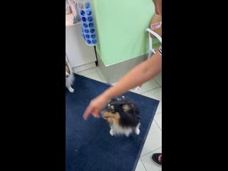 """Видео от Ветеринарная клиника """"Челси"""""""