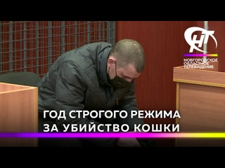 Впервые за убийство домашнего животного в Новгородской области дали реальный срок