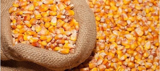 Ооо элеватор кукуруза купить фольксваген транспортер с пробегом в мурманске