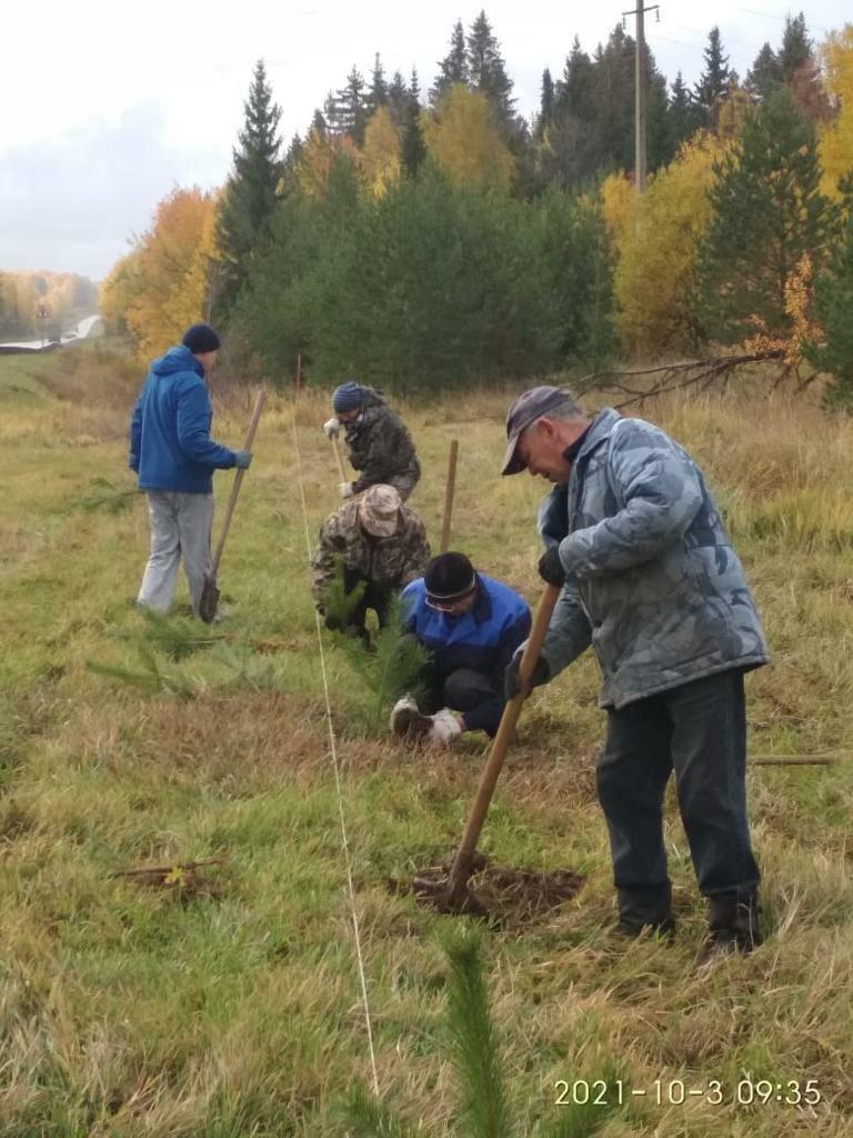 Более 200 саженцев деревьев высадили в Можге