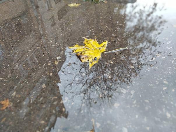 Сегодня в Калуге прогнозируют дождь и первый снегП...