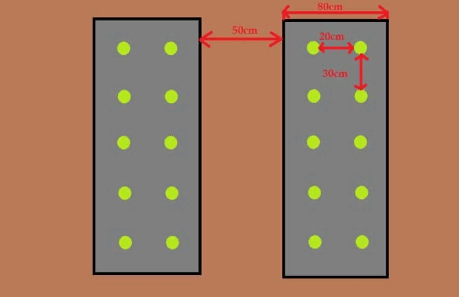 Выращивание ремонтантной клубники, изображение №9