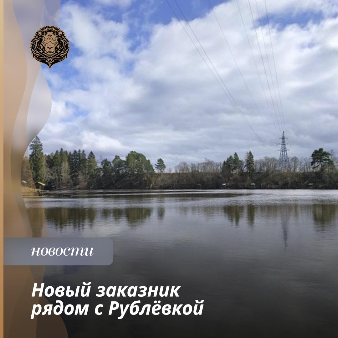 Природный заказник «Дубешненский» создают вОдинцовском округе за городом Звенигородом