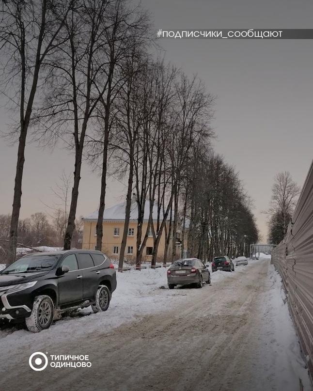 Жители Одинцово-1 обеспокоены судьбой старой липовой аллеи ‼