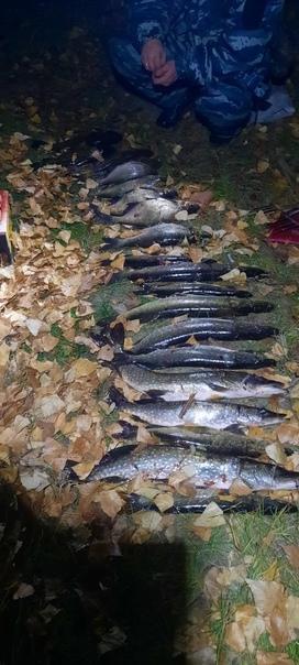 Двух жителей Воткинска задержали за ловлю рыбы с п...