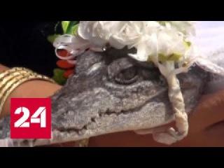Мэр мексиканского города женился на крокодиле