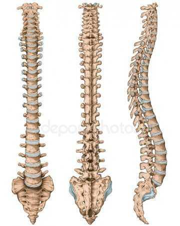 Основное растяжение и физические упражнения могут стать первым шагом в восстановлении травмы спинного мозга.