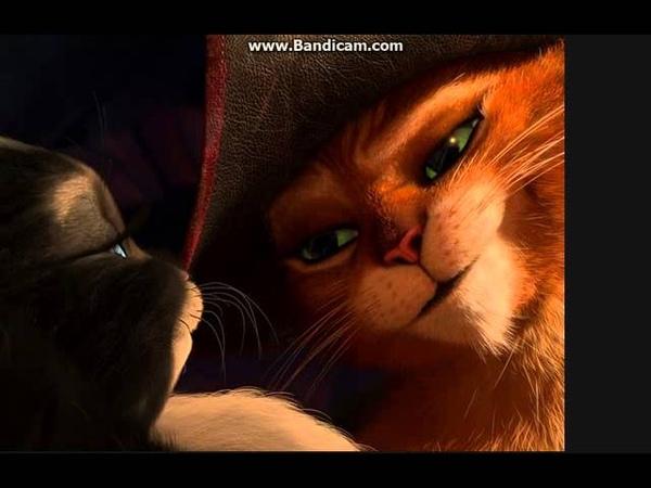 КОТ В САПОГАХ И КИСА МЯГКОЛАПКА Мой котик