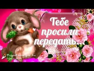 🌸☕️ Доброе утро! 🌸Тебе просили передать... Любви и счастья тебе!🌸Красивая песня любви...