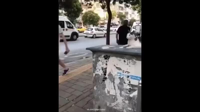 Кот-Задира 🤣