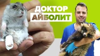 «Я самый счастливый человек»: ветеринар из Белоруссии ставит на лапы животных с тяжёлыми травмами - YouTube