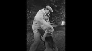 13.  Франция , рабочие собаки