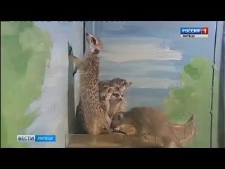 В Липецком зоопарке появились новые необычные животные