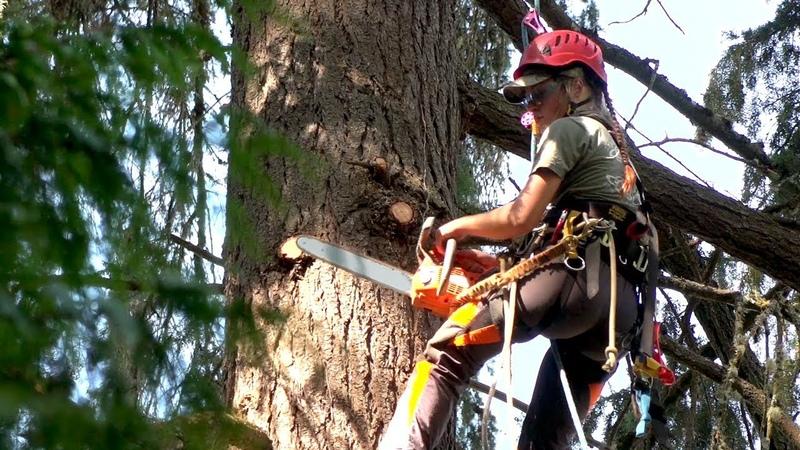 SpeedCut Nano professional arborist saw chain