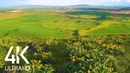 8 HOURS of Birdsong and Wind Whisper Relaxing Atmosphere of Steppe Flower Fields 4K Ultra HD