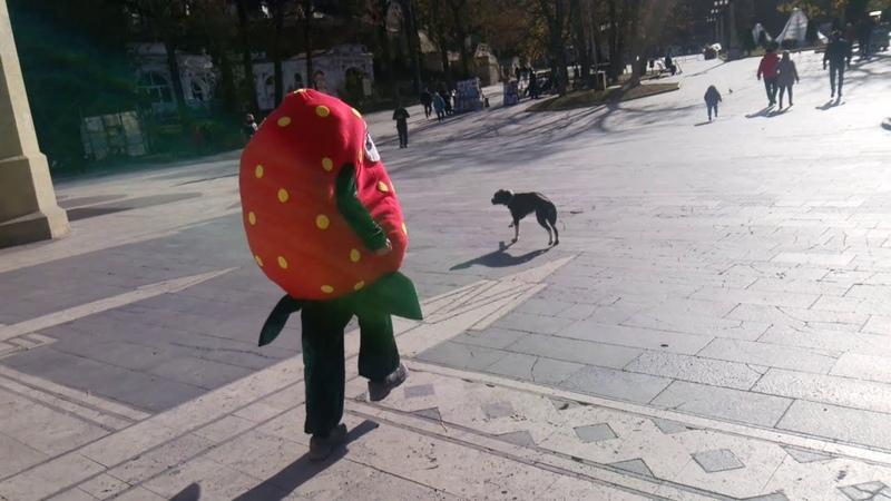 Бардак Кисловодска Злые бродячие собаки в парке Мэрия не наводит порядок в городе