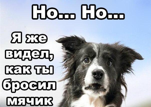 Анекдот Про Собачку