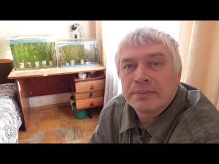 В аквариуме появились новые рыбы - первое видео