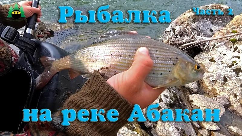 Хорошая рыбалка на реке Абакан и ее притоках Хариус таймень Часть 2 Архив