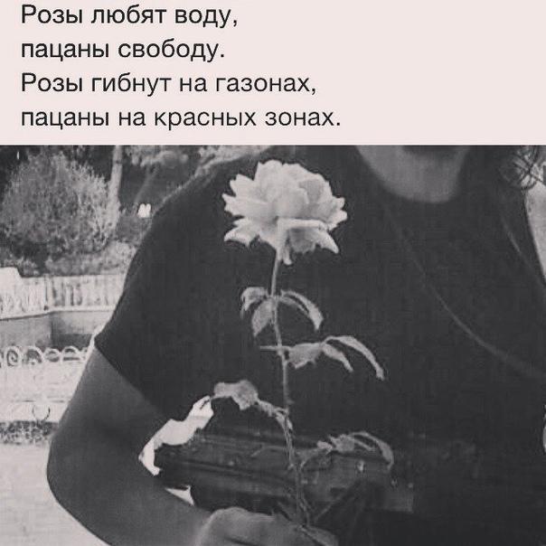 розы гибнут от мороза пацаны от передоза картинка возврат
